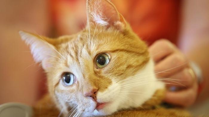 Бой кота с тремя койотами сделал его звездой (видео)