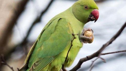 В Австралии попугай спас хозяина от гибели в пожаре