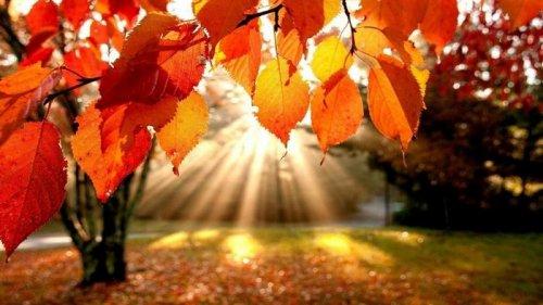 Гороскоп на неделю 1-7 ноября: все знаки зодиака