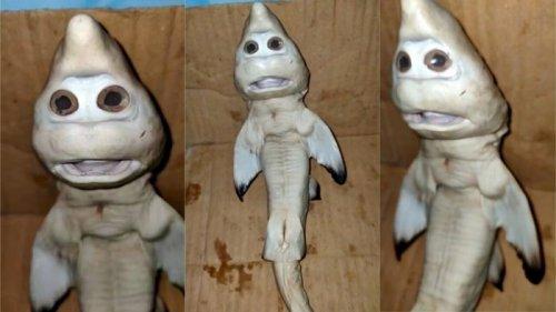 Рыбак поймал аномальную акулу