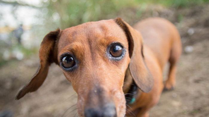 Милые, но злые: 4 проблемные породы собак