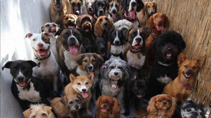 Самые тихие: 5 пород собак, которые практически не лают