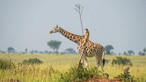 Comedy Wildlife Photography Awards показала самые смешные фото животных