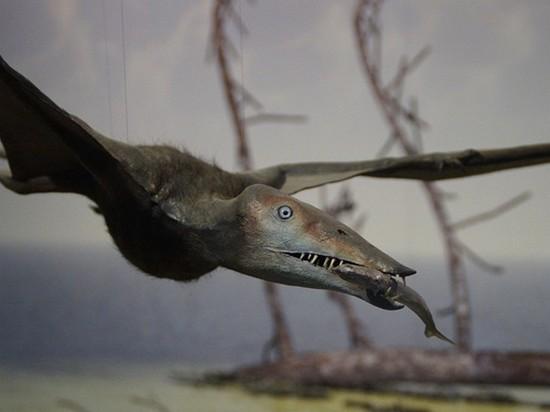 В Британии обнаружили неизвестный вид летающего динозавра