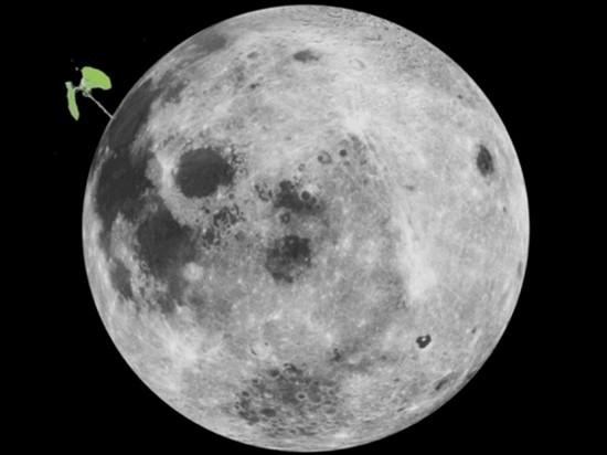 Росток хлопка на китайском лунном ровере умер