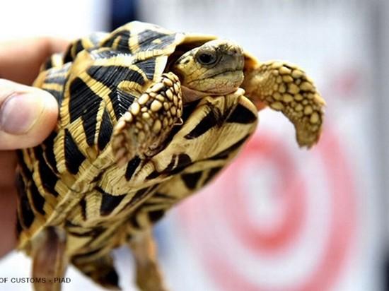 На Филиппинах в брошенном в аэропорту багаже нашли 1500 живых черепах