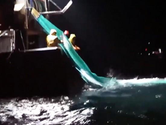 Сотни мертвых израненных дельфинов выбросило на побережье Франции