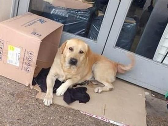 Преданная собака неделю сидела у больницы в ожидании умершего хозяина