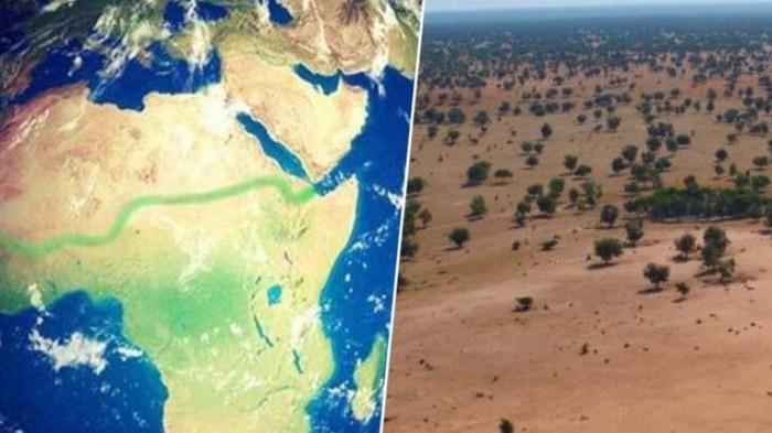 В Африке строят стену из деревьев вокруг Сахары