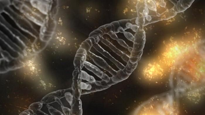 Ученые создали обезьян с человеческим геном в мозгу