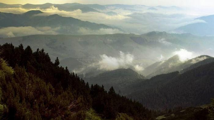 Рада увеличила штрафы за вырубку и уничтожение лесов