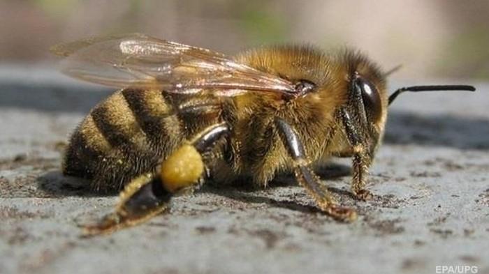 Пара жила с роем пчел в стене два года (фото)