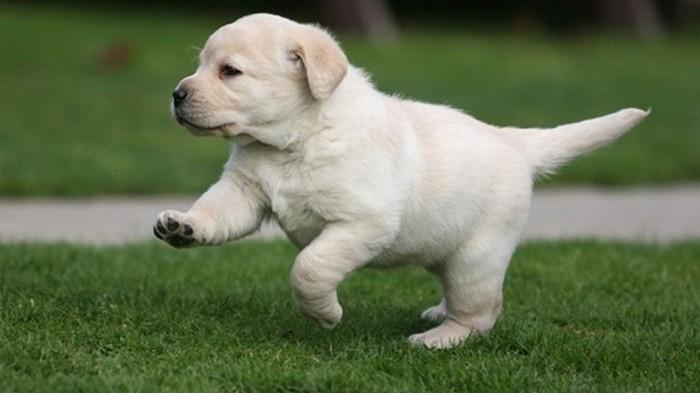 Любовь к собакам заложена в генах – ученые