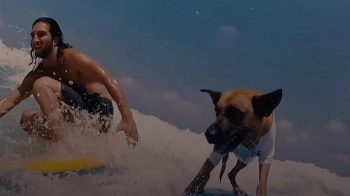 В Израиле пес-серфингист стал звездой (видео)
