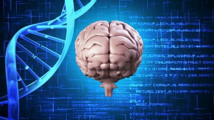 17-летняя школьница из Украины создала компьютерную модель для лечения болезней мозга