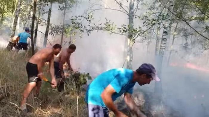 Украинцы помогли потушить лесной пожар в Польше (видео)
