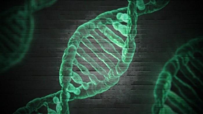Шведские ученые раскрыли главный секрет цепочки ДНК