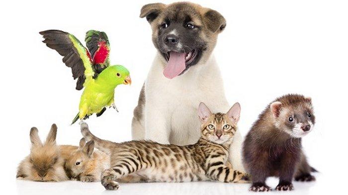 Где купить качественные товары для животных?