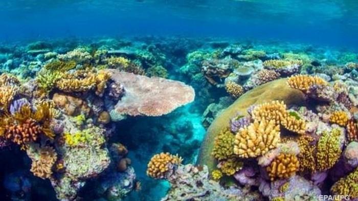 Впервые найдены воскресшие кораллы