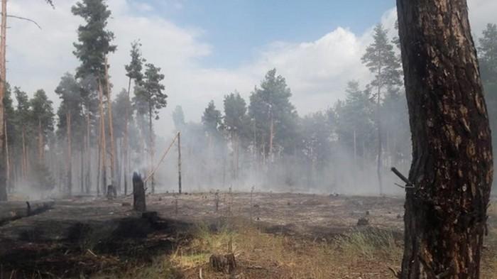 Масштабные пожары охватили леса Прикарпатья