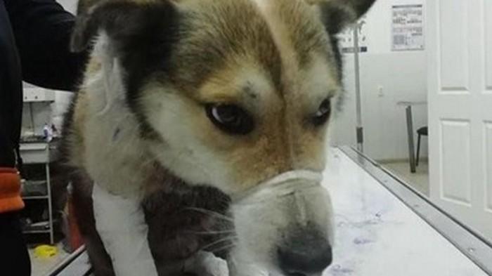 В Хмельницком чиновник привязал собаку к машине и протащил ее 1,5 км (видео)