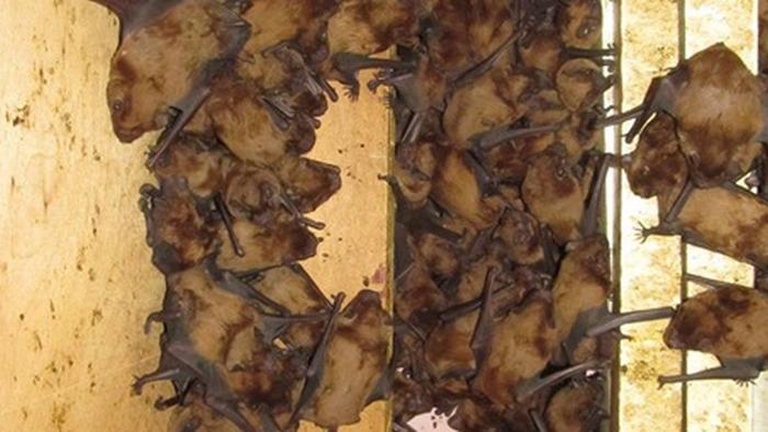Во Львове нашли в квартире 1700 летучих мышей (фото)