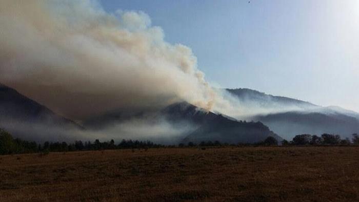 Грузию охватили лесные пожары