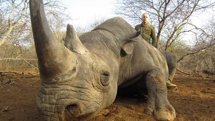 Нардеп признался в убийстве носорогов