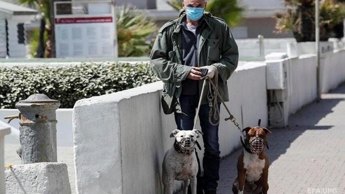 В Италии у кошек и собак выявили антитела к COVID-19