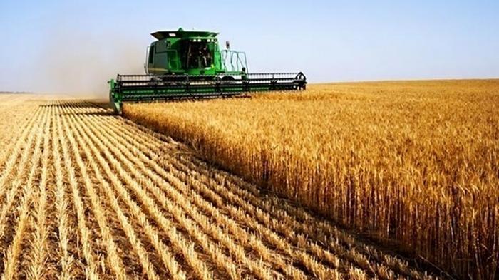 Сельхозпроизводство в Украине замедлило падение