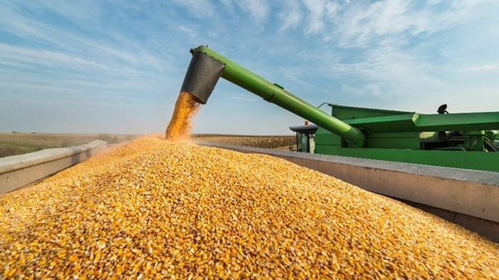 В Украине снижен прогноз урожая зерна