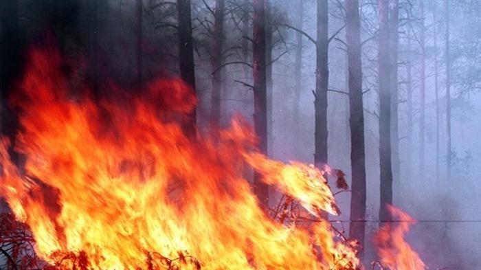 Число лесных пожаров в мире возросло на 13%