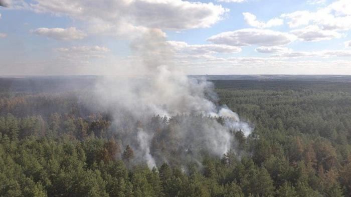 Рада поддержала усиление ответственности за лесные пожары