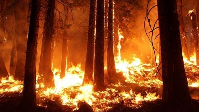 В Греции произошел пожар в лесу