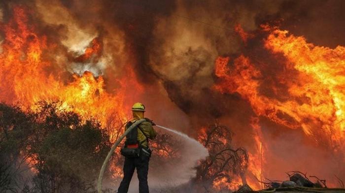 Пожары в США: числе жертв возросло до 23