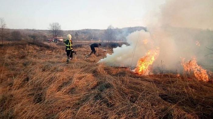 В ГСЧС назвали основную причину возникновения лесных пожаров