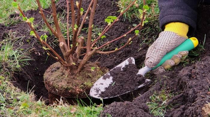 Особенности осеней посадки и защиты деревьев