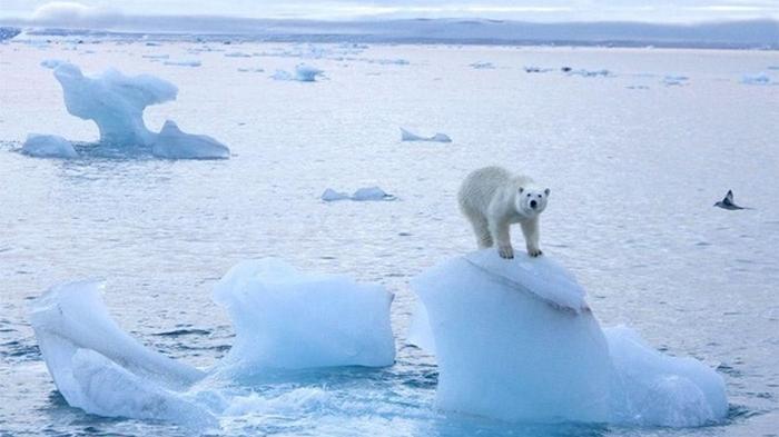Море Лаптевых впервые не замерзло в этот период