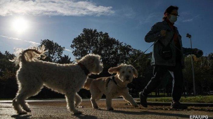 Владельцев собак призвали соблюдать социальную дистанцию между животными