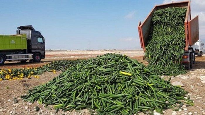 В Испании уничтожают урожай из-за обвала цен (видео)