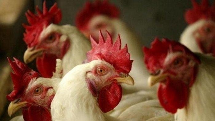 В двух регионах Японии зафиксировали вспышки птичьего гриппа - СМИ