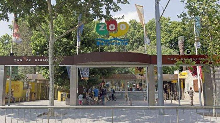 В зоопарке Испании четверо львов заразились COVID-19