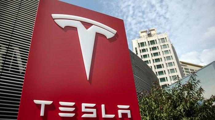 В Германии остановили строительство завода Tesla из-за спящих змей