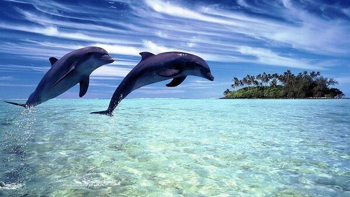 Ученые связали смертельную болезнь дельфинов с глобальным потеплением