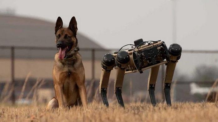 В США военные испытывают робособак Ghost Robotics (видео)