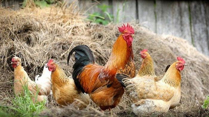 Во Франции одобрили закон, защищающий шумных домашних животных