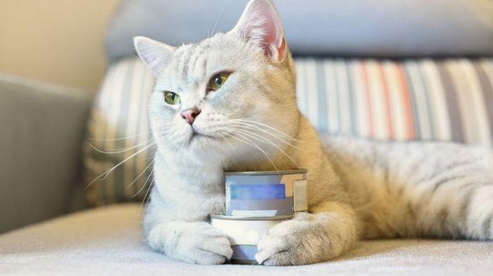 Консервы для кошек: экономия времени и забота о питомце