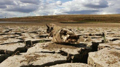 Изменение климата: в Украине ожидают новые болезни