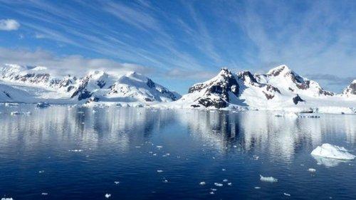 Под толщей льда в Антарктиде нашли неизвестных животных: они облепили ...