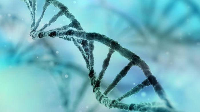 Рекордный нырок в прошлое: Удалось расшифровать ДНК животных возрастом почти 1,3 млн лет
